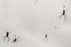 pająk pola fotografia royalty free