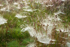 pająk sieci Zdjęcie Stock