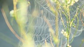 Pająk sieci chwianie na wiatrze zbiory wideo