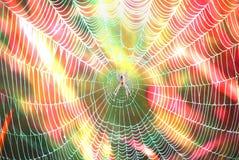 Pająk w sieci na barwionym tle Zdjęcie Stock