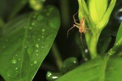 pająka zielony drzewo Obrazy Stock