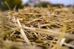 Paja con alcohol del color oro y del otoño foto de archivo