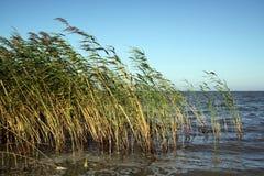 Paja de la hierba foto de archivo