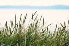 Paja de la hierba Imagen de archivo libre de regalías