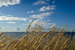 Paja de la hierba por la costa Foto de archivo libre de regalías