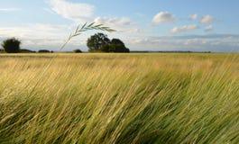 Paja de la hierba sobre campo de la cebada imágenes de archivo libres de regalías