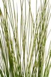 Paja de la hierba verde Foto de archivo libre de regalías