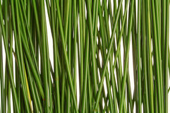 Paja de la hierba verde Imagen de archivo libre de regalías