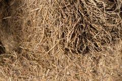 paja del arroz Fotografía de archivo libre de regalías
