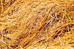 Paja del arroz seca Imágenes de archivo libres de regalías