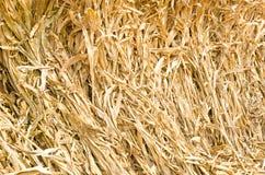 Paja del maíz Fotos de archivo