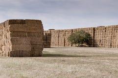 Paja o heno apilado en un campo después de cosechar Fotografía de archivo libre de regalías