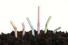 Paja que crece fuera de la tierra Imagen de archivo