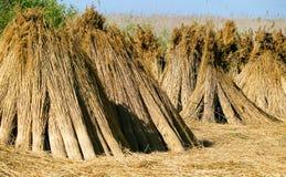 Paja seca, concepto de la naturaleza Fotografía de archivo