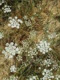 Paja y flores Fotos de archivo libres de regalías