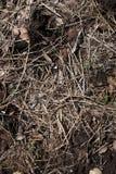 Paja y follaje moldeados para el suelo Imagenes de archivo