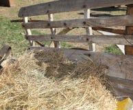 Paja y heno sobre el carro de la granja Foto de archivo libre de regalías