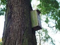 Pajarera, alimentador de madera del pájaro en un árbol para los pájaros fotografía de archivo libre de regalías