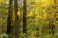 Pajarera brillantemente coloreada en el lado de un árbol en el otoño fotografía de archivo libre de regalías