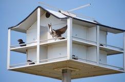 Pajarera con los pájaros de los polluelos del bebé que son alimentados Imagenes de archivo
