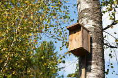Pajarera de madera en abedul Imagen de archivo