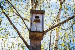 Pajarera de madera en el árbol de abedul con las hojas verdes Fotografía de archivo libre de regalías