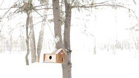 Pajarera de madera en el tronco de un árbol de abeto, cuidado para las ardillas y pájaros salvajes almacen de video
