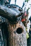Pajarera de madera en un árbol imágenes de archivo libres de regalías