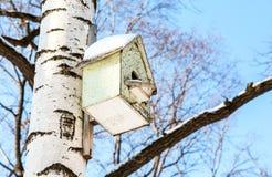 Pajarera de madera en un árbol de abedul en el parque Imágenes de archivo libres de regalías