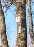 Pajarera de madera en un árbol de abedul en el parque Fotografía de archivo libre de regalías