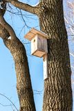 Pajarera de madera en un árbol de abedul en el parque Fotografía de archivo