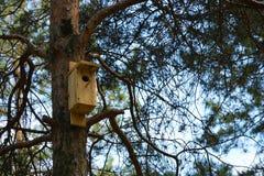 Pajarera de madera en un bosque del pino Fotos de archivo