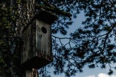 Pajarera de madera vieja en un árbol en un bosque imagen de archivo