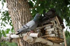 Pajarera del alimentador de la paloma Imágenes de archivo libres de regalías