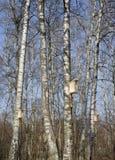 Pajarera en árbol Imagen de archivo