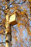 Pajarera en árbol de abedul Imagen de archivo libre de regalías