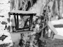 Pajarera en árbol de abedul Nidal en un árbol en un parque, primavera Fotografía de archivo