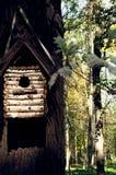Pajarera en árbol en el bosque del otoño Foto de archivo