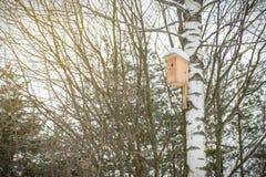 Pajarera en el árbol de abedul en bosque del invierno Imágenes de archivo libres de regalías