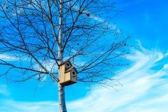 Pajarera en el árbol de abedul, fondo del cielo azul Nidal en un t Foto de archivo