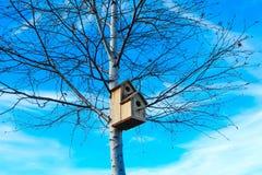 Pajarera en el árbol de abedul, fondo del cielo azul Nidal en un t Imágenes de archivo libres de regalías