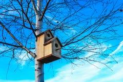 Pajarera en el árbol de abedul, fondo del cielo azul Nidal en un t Fotografía de archivo libre de regalías