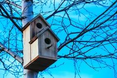 Pajarera en el árbol de abedul, fondo del cielo azul Nidal en un t Fotos de archivo libres de regalías