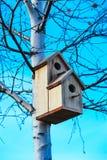 Pajarera en el árbol de abedul, fondo del cielo azul Nidal en un t Foto de archivo libre de regalías