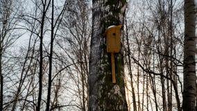 Pajarera en el bosque 2 del invierno Fotos de archivo libres de regalías