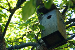 Pajarera en jardín al aire libre Imágenes de archivo libres de regalías