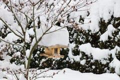 Pajarera en un árbol cubierto con nieve Imagen de archivo
