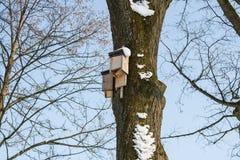 Pajarera en un árbol de abedul en el winte, listo Foto de archivo libre de regalías