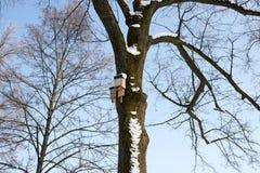 Pajarera en un árbol de abedul en el winte, listo Fotografía de archivo libre de regalías