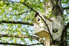 Pajarera en un árbol de abedul, hecho a mano outdoor Imágenes de archivo libres de regalías